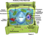 Cell Biology Terminology